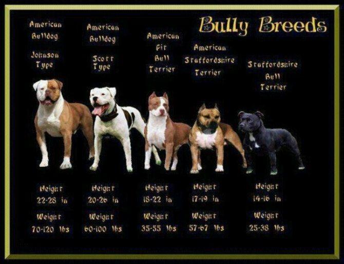 Имена для бойцовских собак
