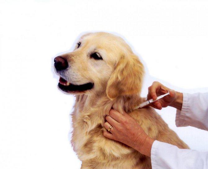иммуномодулятор для собак в таблетках