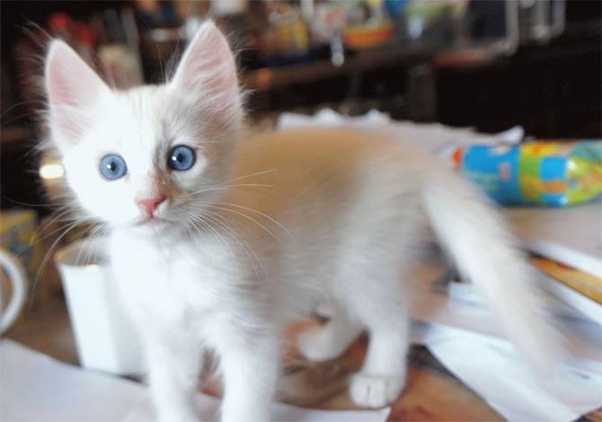 имя для белого котенка
