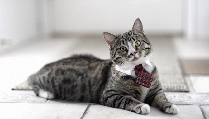 Инструкция к кошачьему Антисексу