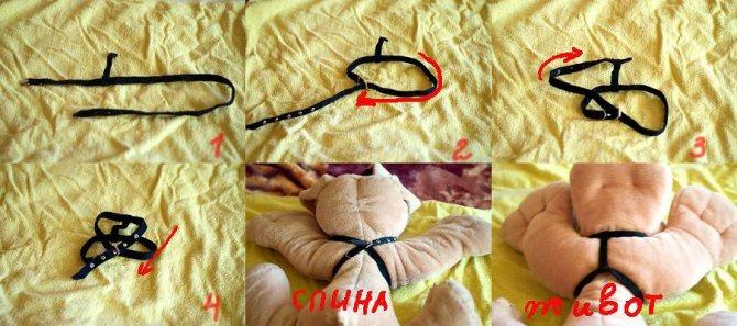 инструкция: как надеть шлейку на кошку