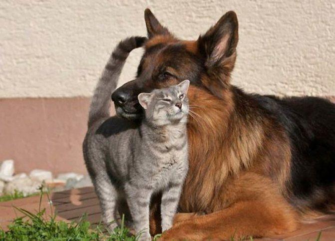 Интеллект кошек и собак
