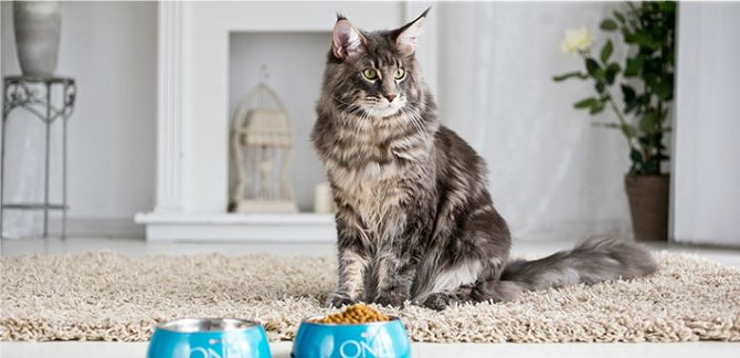 Ипакитине для кошек: инструкция по применению, аналоги