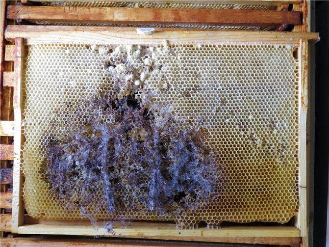 Испорченная гусеницами рамка