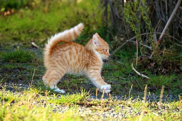 Испуганный котенок с выгнутой спиной, фото фотография