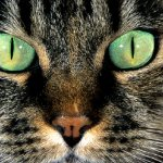 Исследование: как кошки видят мир?