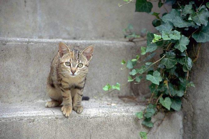"""'Истинное одомашнивание (или, точнее """"приручение"""") кошек, как ранее считалось, произошло в Египте около 3600 лет назад.' width=""""640"""