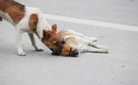 истории о собачьей преданности, собачья верность