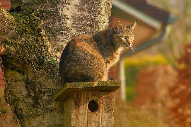 История одомашнивания кошек