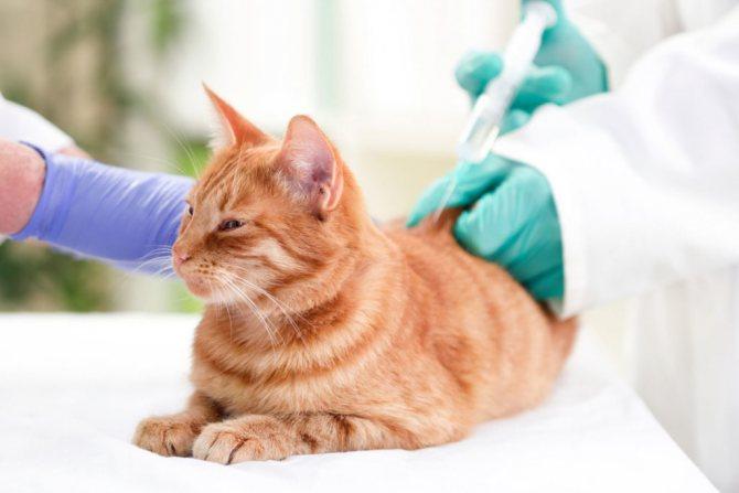 Ивермек для кошек передозировка что делать