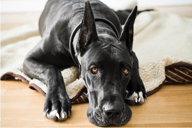 из-за чего появляется моча в крови у собаки