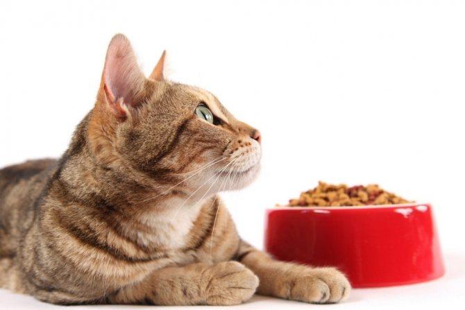 изменение рациона у кошки