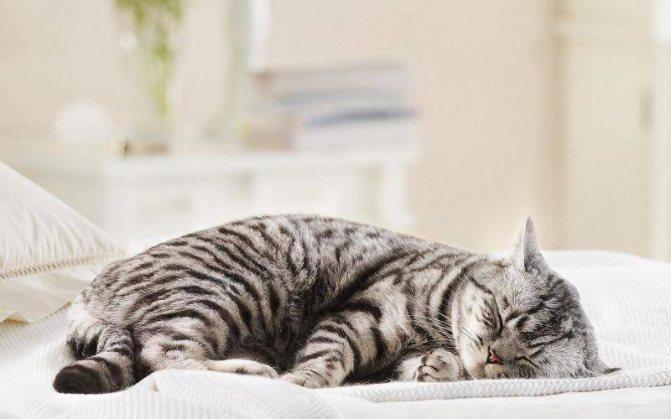 Измерять температуру лучше тогда, когда кошка спит