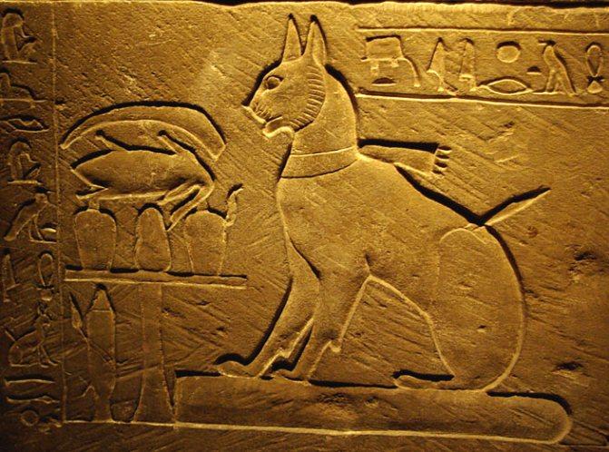 Изображение кошки на саркофаге Тутмоса, сына Аменхотепа III. Фото: Larazoni / Wikimedia Commons.org («Наука и жизнь» №8, 2017)