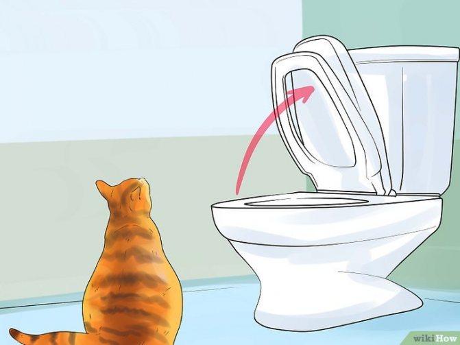 Изображение с названием Toilet Train Your Cat Step 10