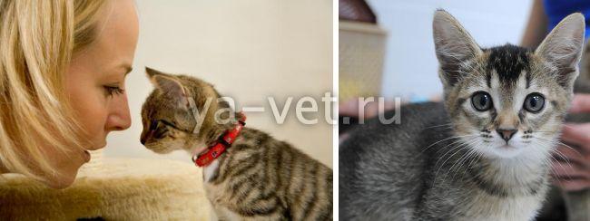 изоспороз у кошек