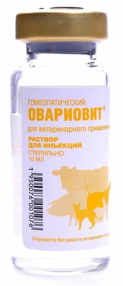 Ложная беременность у собак: лечение, препараты, рекомендации ветеринаров. Опасность ложной беременности у собак