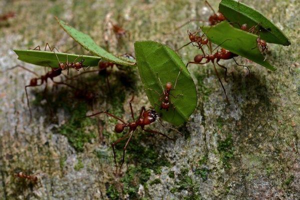 к чему девушке снятся муравьи