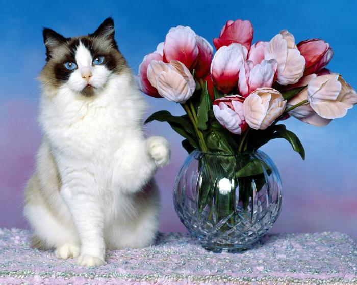 к чему приходит кошка в дом примета