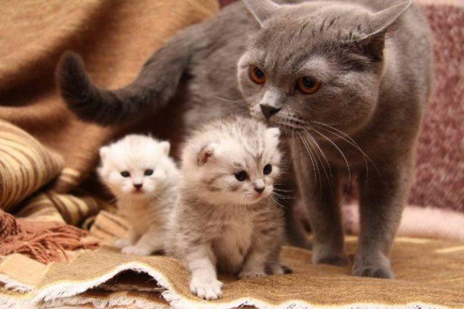 К чему снится кошка с котятами женщине