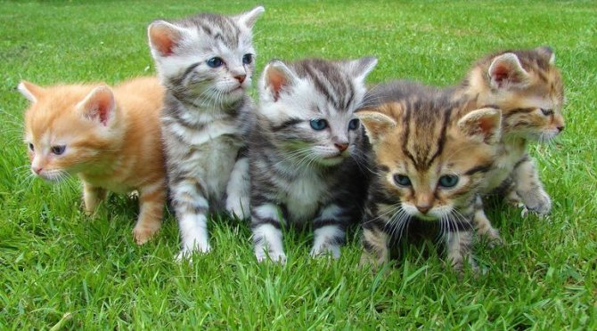 К чему снятся котята маленькие много