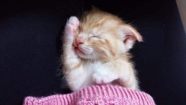 К чему снятся маленькие котята узнайте больше