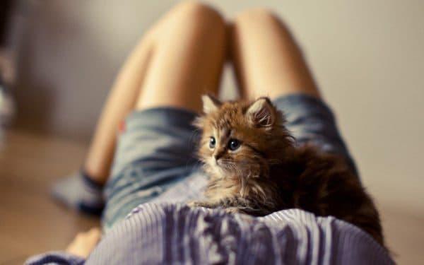 К чему снятся маленькие котята женщине читайте статью