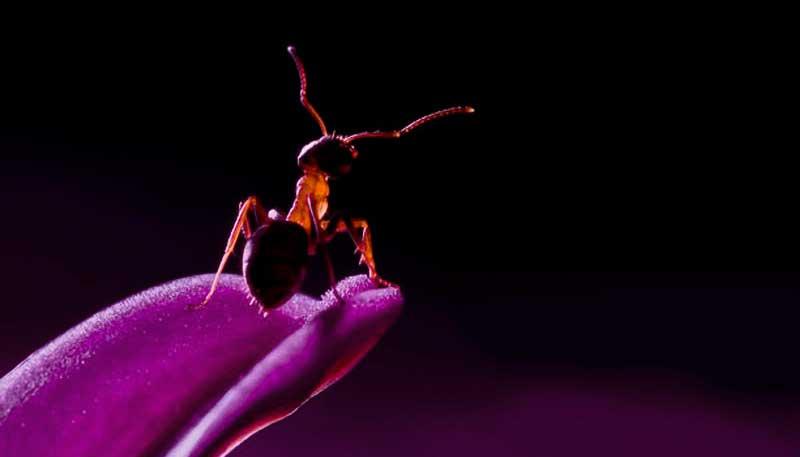 К чему снятся муравьи - сонник