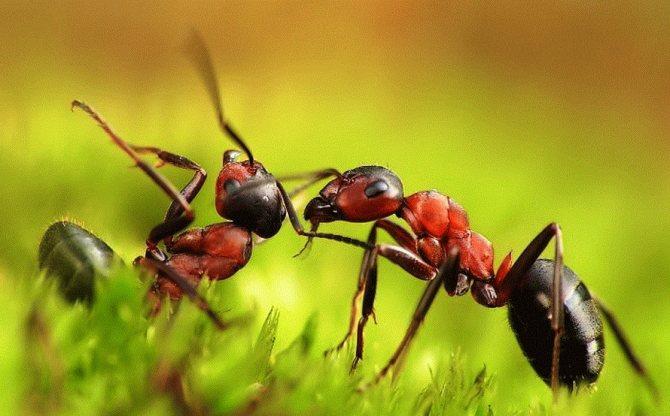 К чему снятся во сне много муравьев, в большом количестве?