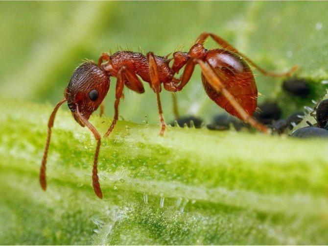 К чему снятся во сне муравьи у себя на теле, ползающими на ногах, в голове, волосах?
