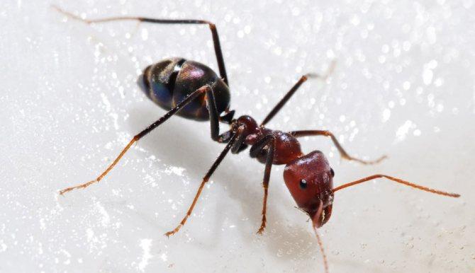 К чему снятся во сне муравьи в доме, квартире, на кухне, стенах, в кровати?