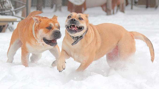 кадебо играют в снегу фото