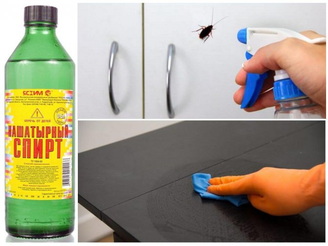 Как бороться с тараканами в квартире Народное средство от тараканов. Ультразвуковой отпугиватель тараканов