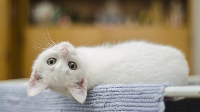 Как часто глистогонить кошку