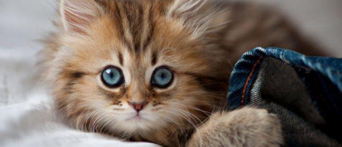 Как часто кот должен какать