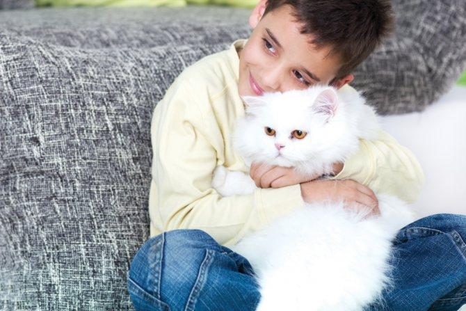 Как человек приручил кошку