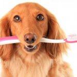 Как чистить зубы собаке?
