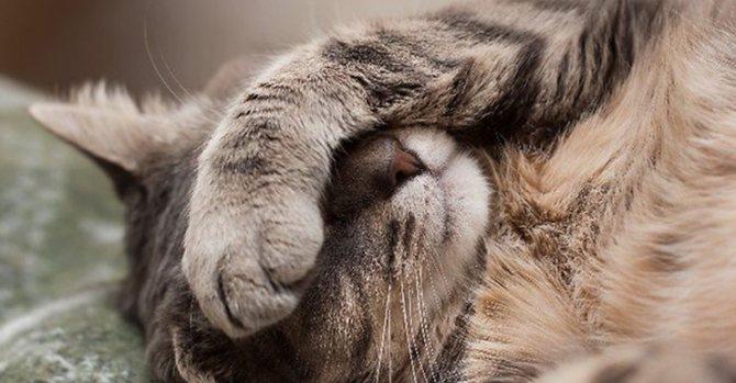 Как давать Энтеросгель кошке