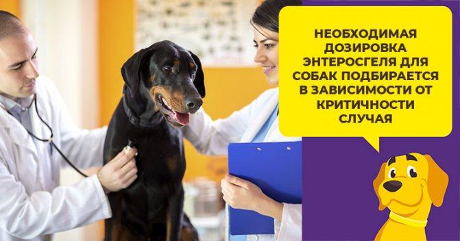 Как давать собаке Энтеросгель при поносе и отравлении