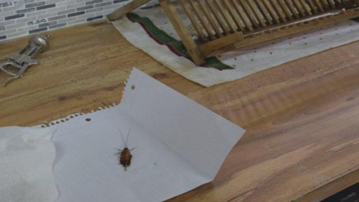как действуе дохлокс от тараканов отзывы