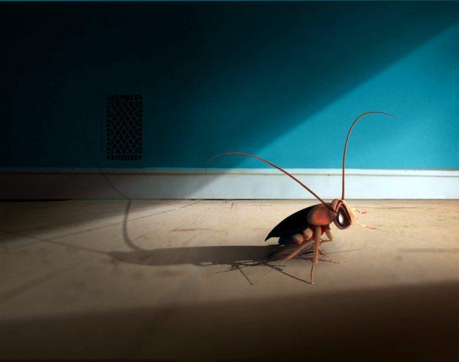 Как долго живут тараканы