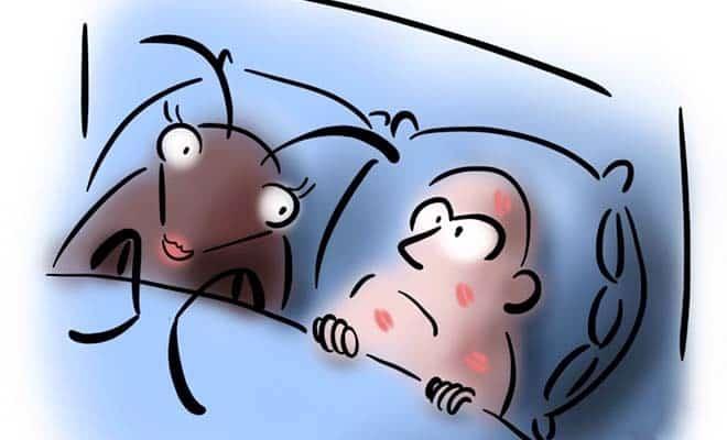 Как домашние постельные клопы кусают человека 01