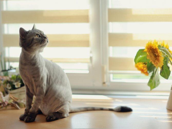 Как и для чего делают стрижку кошке