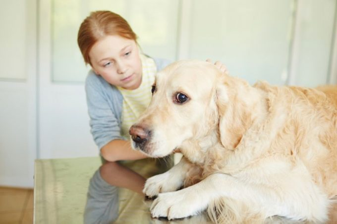 как избавить собаку от стресса