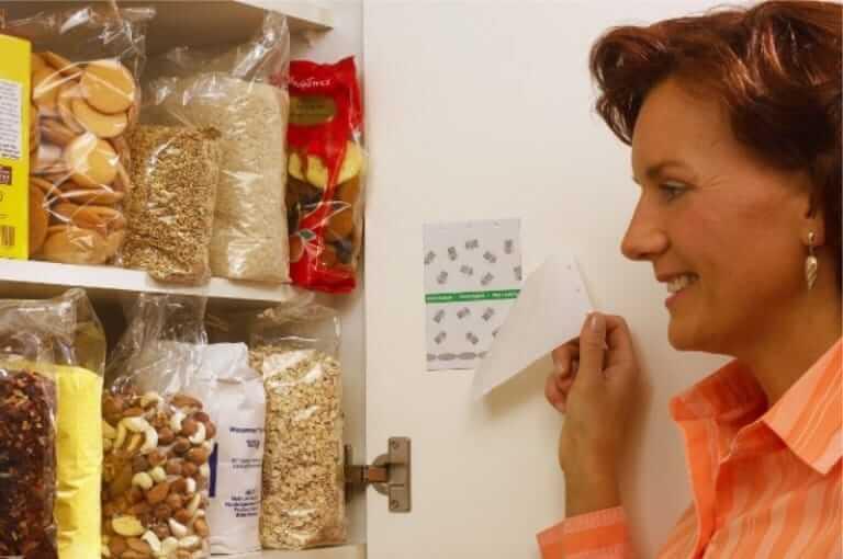 Как избавиться от моли на кухне