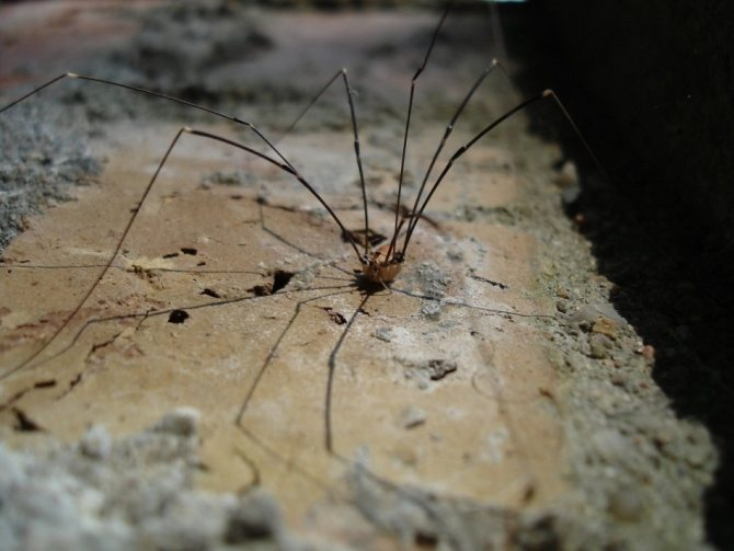 Как избавиться от пауков в доме навсегда?