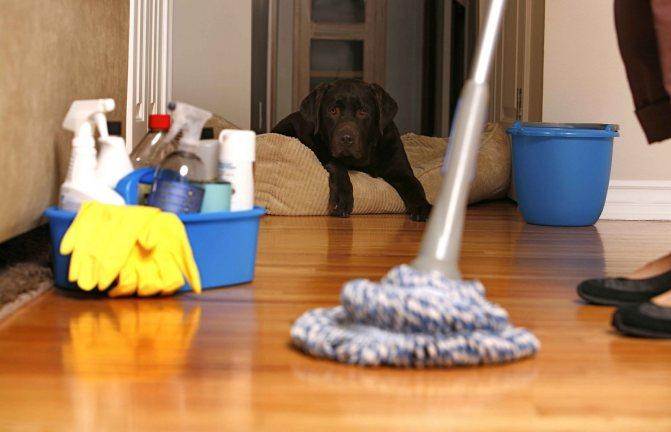 Как избавиться от пылевых клещей в доме »