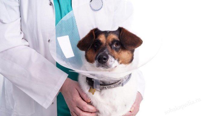 Как кормить собаку после операции
