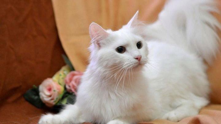 Как кошка указывает на присутствие негатива в доме