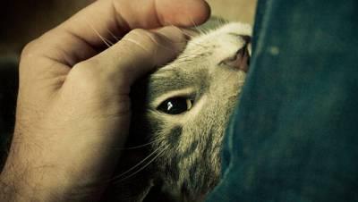 Как кошки мурлыкают и откуда издается звук – как урчат коты?
